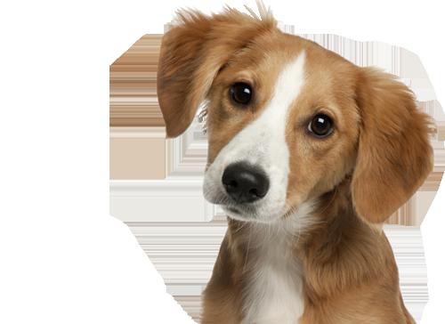 Hond Huisdier Producten Webshop
